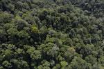 Borneo rainforest -- sabah_aerial_1675