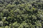 Borneo rainforest -- sabah_aerial_1676