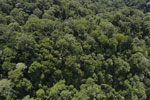 Borneo rainforest -- sabah_aerial_1678