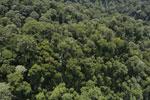 Borneo rainforest -- sabah_aerial_1679
