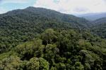 Borneo rainforest -- sabah_aerial_1681