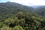 Borneo rainforest -- sabah_aerial_1683