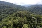Borneo rainforest -- sabah_aerial_1685