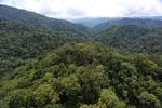 Borneo rainforest -- sabah_aerial_1686