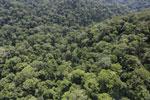 Borneo rainforest -- sabah_aerial_1687