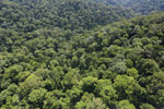 Borneo rainforest -- sabah_aerial_1689
