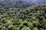 Borneo rainforest -- sabah_aerial_1690