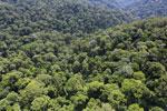 Borneo rainforest -- sabah_aerial_1691