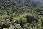 Borneo rainforest -- sabah_aerial_1692
