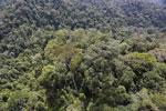 Borneo rainforest -- sabah_aerial_1694