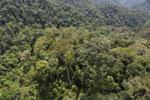 Borneo rainforest -- sabah_aerial_1695