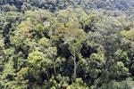 Borneo rainforest -- sabah_aerial_1696