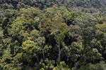 Borneo rainforest -- sabah_aerial_1697