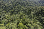 Selectively logged forest in Borneo -- sabah_aerial_1699