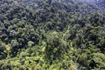 Selectively logged forest in Borneo -- sabah_aerial_1704