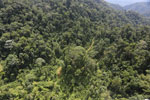 Selectively logged forest in Borneo -- sabah_aerial_1705