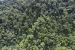 Selectively logged forest in Borneo -- sabah_aerial_1708