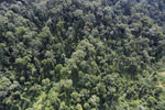 Selectively logged forest in Borneo -- sabah_aerial_1709