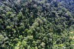 Selectively logged forest in Borneo -- sabah_aerial_1710
