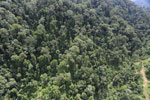 Selectively logged forest in Borneo -- sabah_aerial_1713