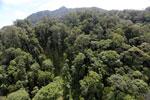 Borneo rainforest -- sabah_aerial_1714