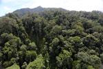 Borneo rainforest -- sabah_aerial_1715