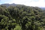 Borneo rainforest -- sabah_aerial_1717