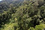 Borneo rainforest -- sabah_aerial_1718