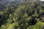 Borneo rainforest -- sabah_aerial_1719
