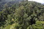 Borneo rainforest -- sabah_aerial_1720