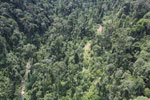 Industrially logged rainforest in Borneo