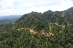 Industrial logging in Sabah -- sabah_aerial_1729