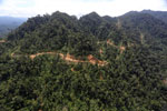 Industrial timber harvesting in Sabah