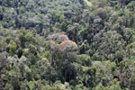 Flowering rainforest trees -- sabah_aerial_1746