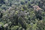 Flowering rainforest trees -- sabah_aerial_1749