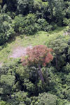 Flowering rainforest trees -- sabah_aerial_1754