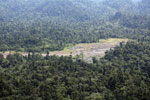 Rainforest log dump