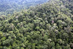 Borneo rainforest -- sabah_aerial_1771