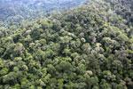 Borneo rainforest -- sabah_aerial_1772