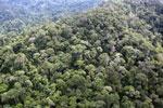 Borneo rainforest -- sabah_aerial_1773