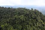 Borneo rainforest -- sabah_aerial_1777
