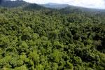Borneo rainforest -- sabah_aerial_1820