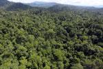Borneo rainforest -- sabah_aerial_1821