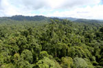 Borneo rainforest -- sabah_aerial_1822