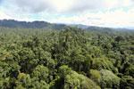 Borneo rainforest -- sabah_aerial_1823