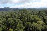 Borneo rainforest -- sabah_aerial_1825