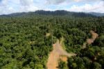 Logging operation in Borneo