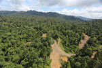 Logging operation in Borneo -- sabah_aerial_1830