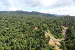 Logging operation in Borneo -- sabah_aerial_1831