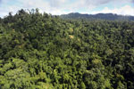Selectively logged forest in Borneo -- sabah_aerial_1838